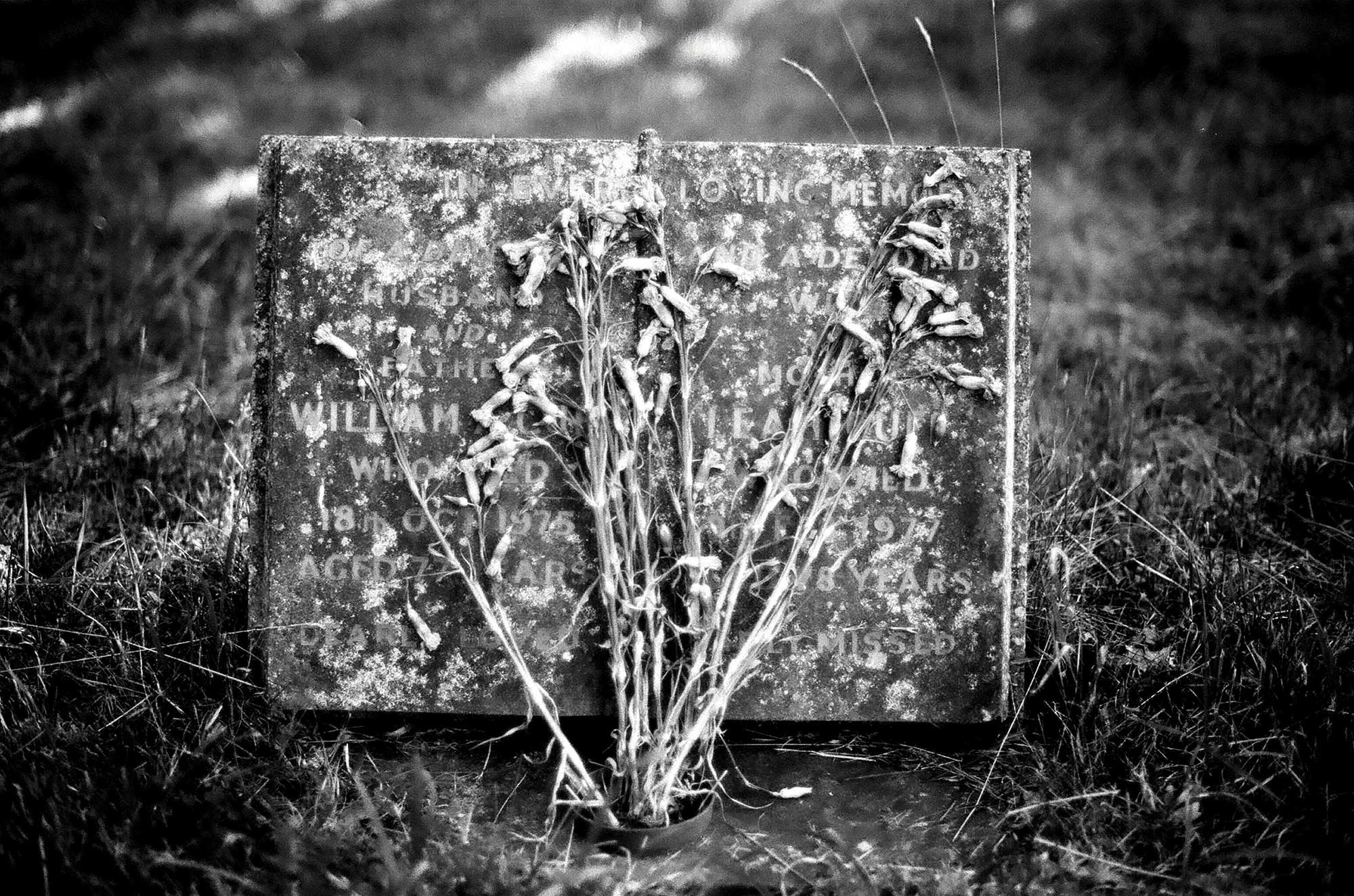 english tombflower